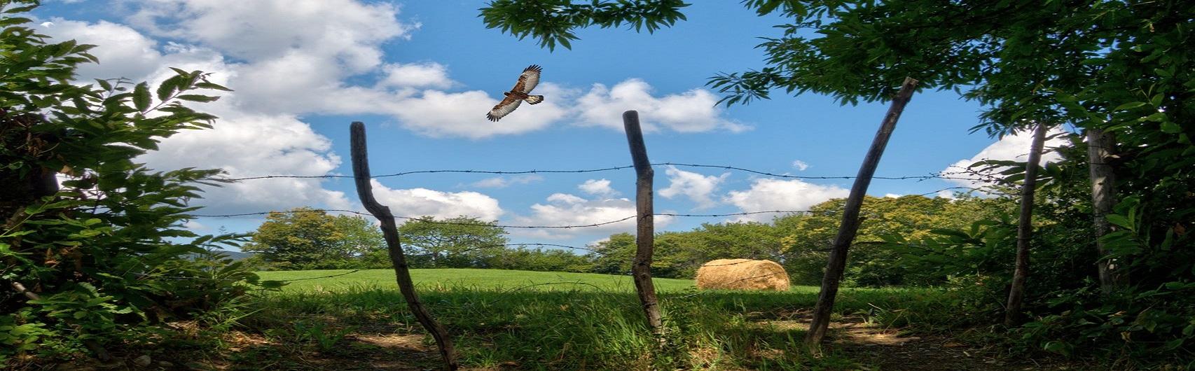 Slow Trekking Food - Aquile, boschi e prodotti spontanei