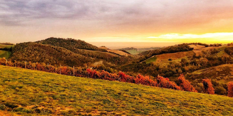 colline vigne autunno.jpg