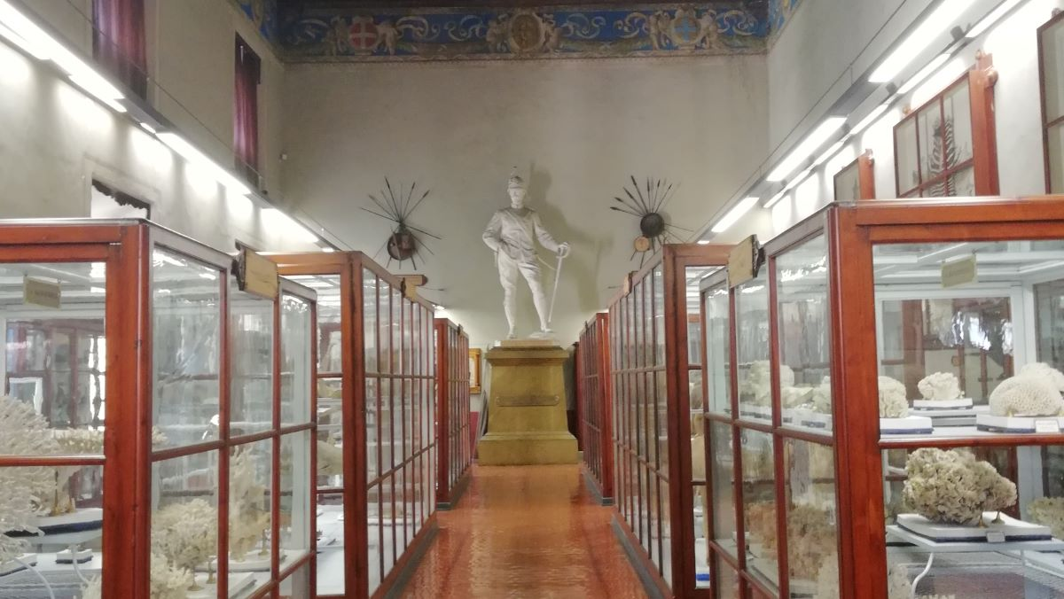 MuseoBottego.jpg
