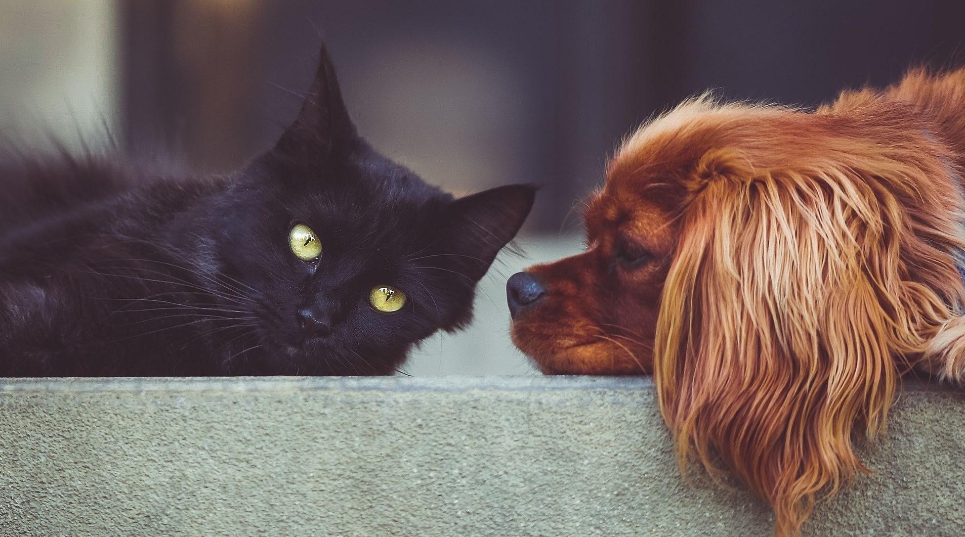 Cane gatto.jpg